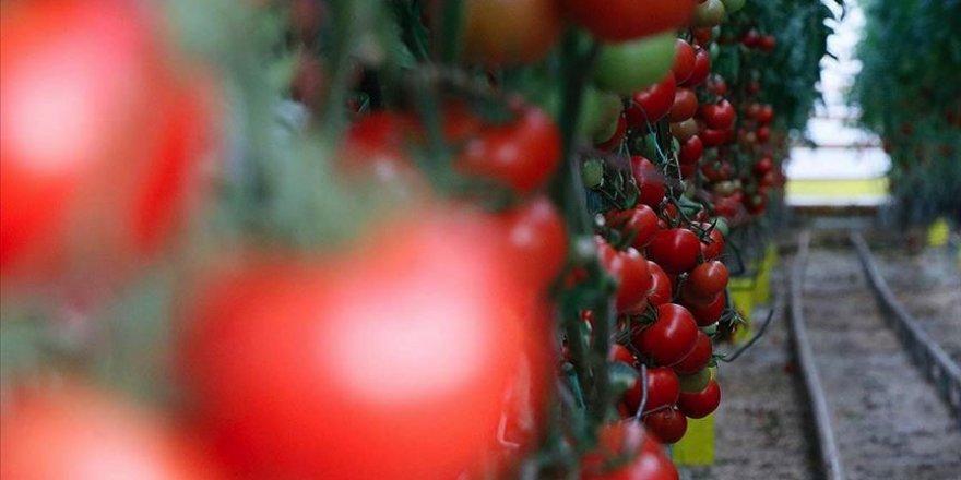 İlk 5 ayda Türkiye'nin gıda ihracatı yüzde 118 arttı