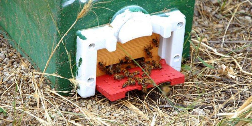 Kırıkkale'de ana arı yetiştiriciliği başlatıldı