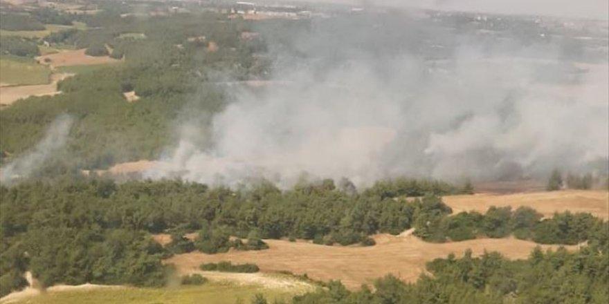 Adana'da yakılan anız nedeniyle orman yangını çıktı