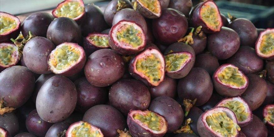 Tropikal meyve 'passiflora'nın üretimi artıyor