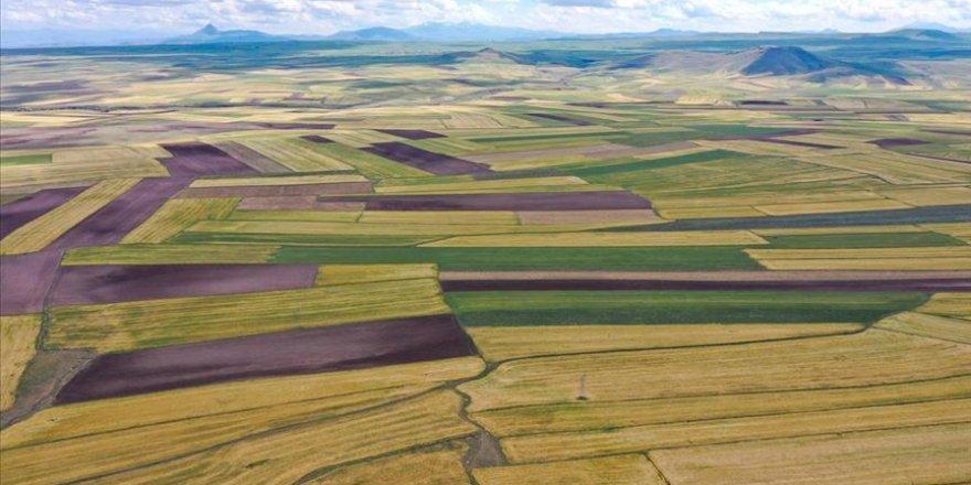 Havadan görüntülenen  arpa ve buğday tarlaları güzel görüntüler oluşturdu