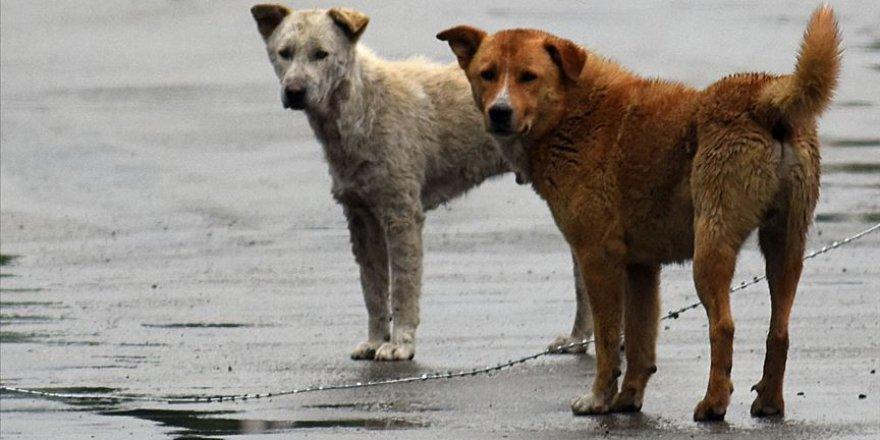 Hindistan'ın bir eyaletinde köpek eti satışı yasaklandı