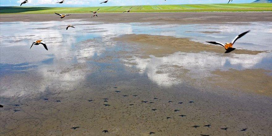 Kuşların göç rotası Kuyucuk Gölü oldu