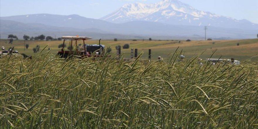 Yerli tohumlar 80 ülkede filizleniyor