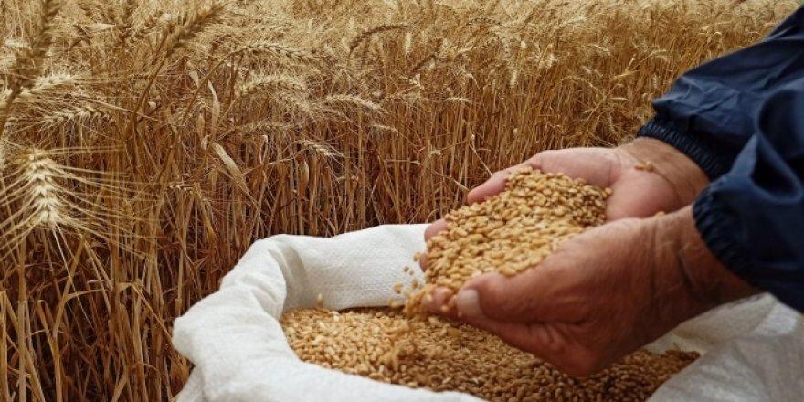 Yerli ve milli imkanlarla üretilen buğday tohumu tanıtıldı