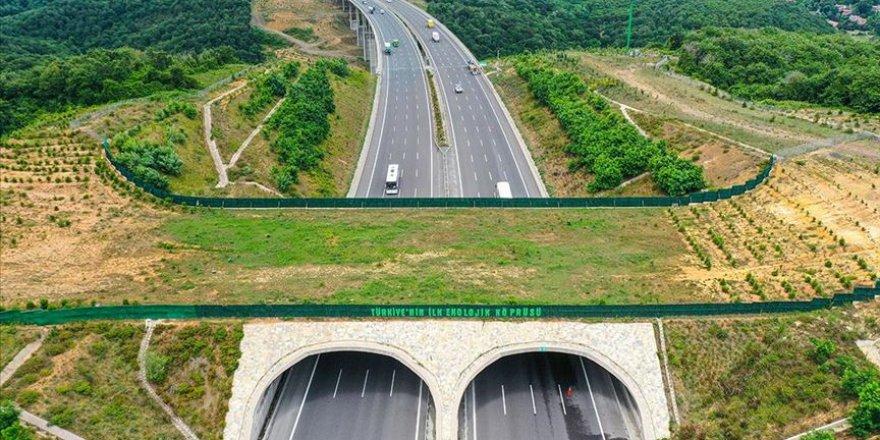 Ekolojik köprüler yaban hayvanlarının güvenli geçiş rotası oluyor