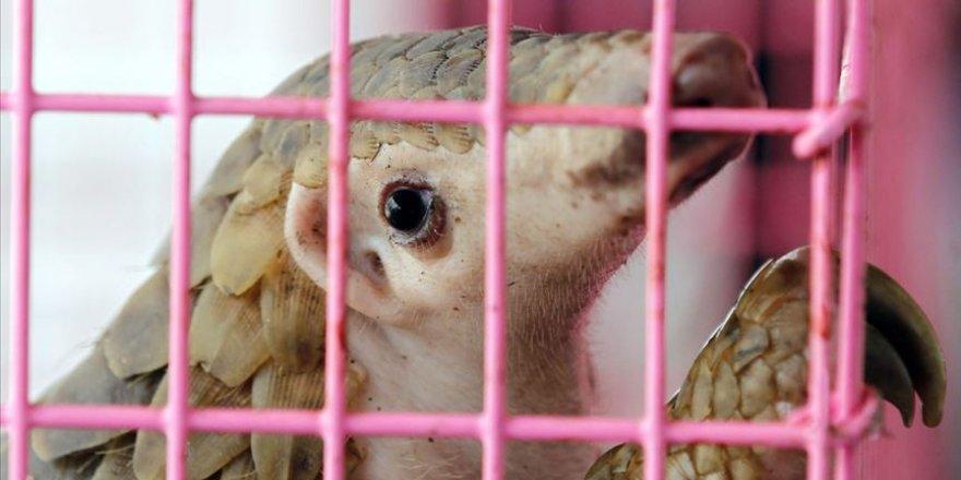 Hayvanlardan insanlara geçen hastalıklar bulaşıcı hastalıkların yüzde 75'ini oluşturuyor