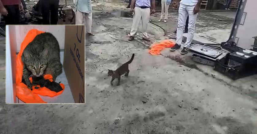 Yavrularını kurtarmak için adeta ekiplerden yardım istedi