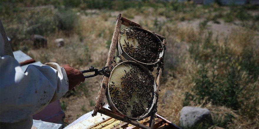 Arıları için evinden 860 kilometre uzaklıkta yaşıyor