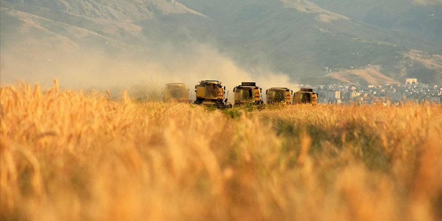 Sivas'ta 10 bin dekar tarım arazisi etkili olan doluda zarar gördü