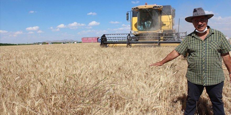 Yerli buğday tanıtıldı