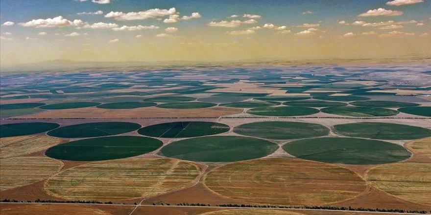 Konya'nın devasa tarlaları muhteşem görüntüler oluşturuyor