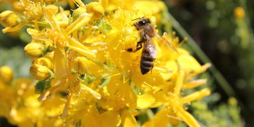 Mersin'de yetiştirilen kraliçe arılar kaliteli bal üretimi için üreticilere gönderiliyor