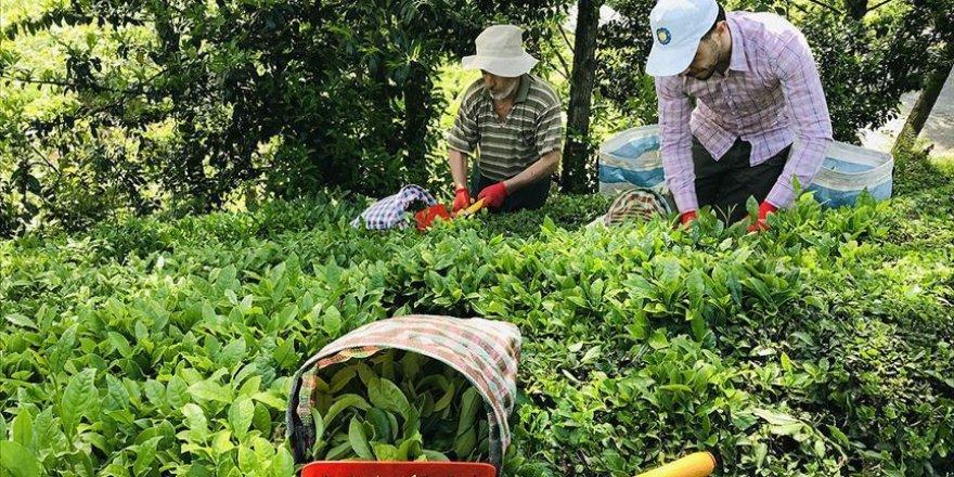 Yılın ilk yarısında Türk çayı 7,5 milyon dolar kazandırdı