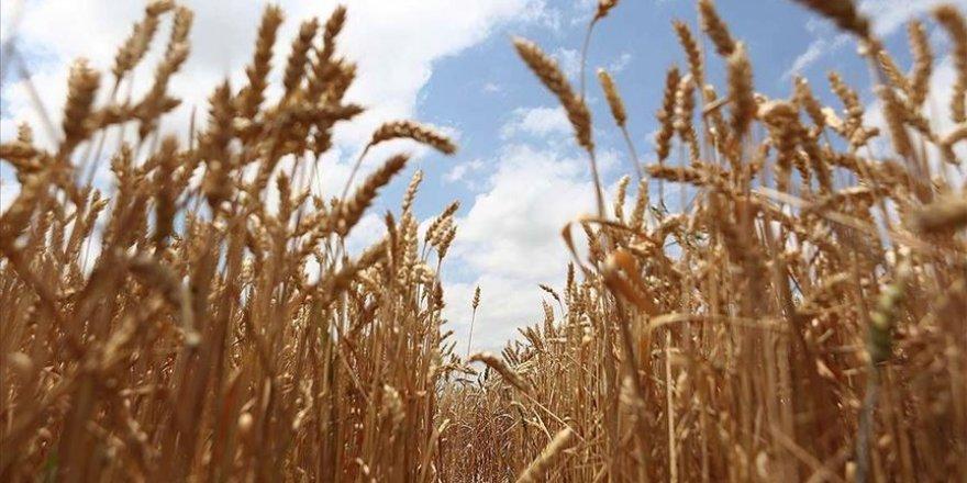 TİGEM yerli ve milli sebze tohumu ile çiftçiye destek