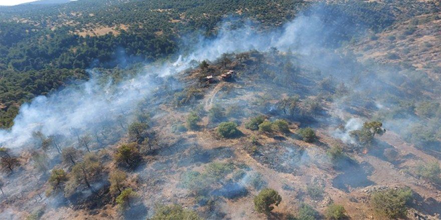 Gaziantep'te ormanlık alanda yangın çıktı