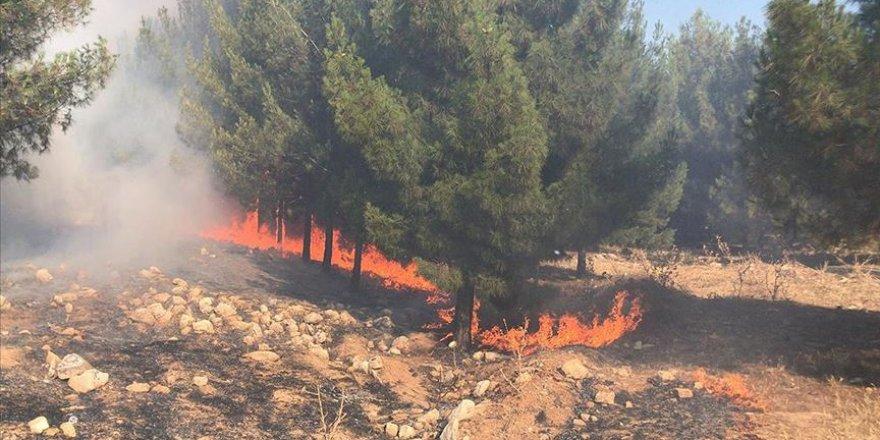 Şanlıurfa'da çıkan yangında yaklaşık 45 hektar ormanlık alan zarar gördü