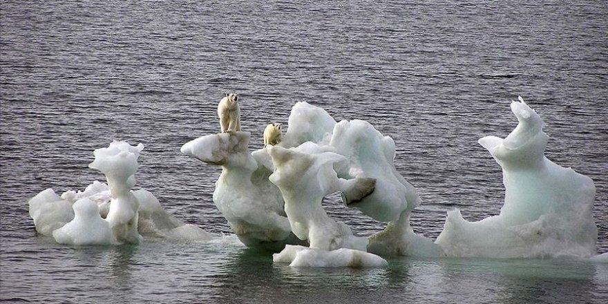 Bu yüzyıl içinde kutup ayılarının nesli tükenebilir