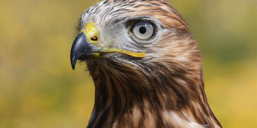 Van'da tedavisi biten 23 kuş doğaya bırakıldı