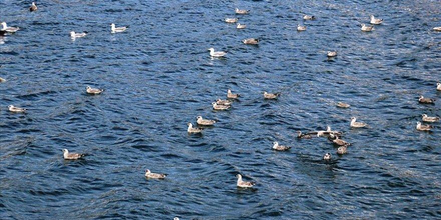 Balık Gölü'ne göçmen kuşlar renk katıyor