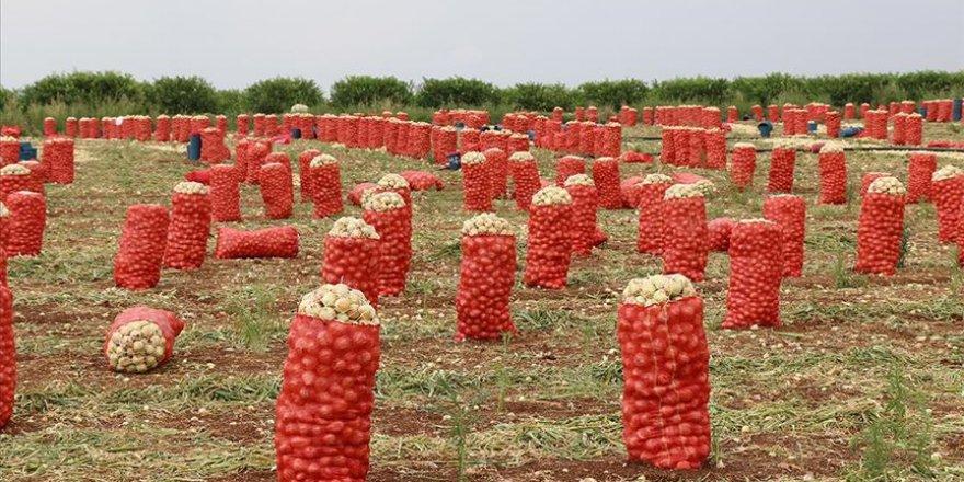 Soğan ve patates ihracatı serbest bırakıldı