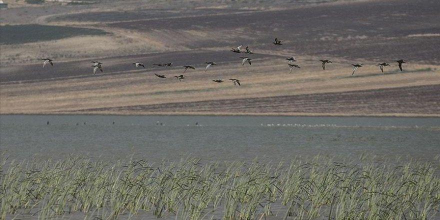 Reyhanlı Barajı göçmen kuşlara ev sahipliği yapmaya başladı