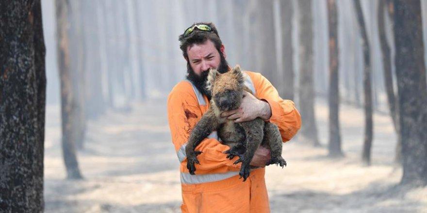 Yaklaşık 3 milyar hayvan Avustralya'daki yangınlardan etkilendi