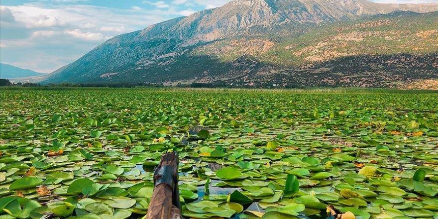 Işıklı Gölü nilüfer çiçekli manzarasıyla doğaseverleri ağırlıyor