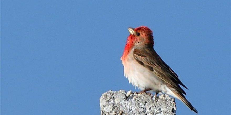 Sarıkamış'ta 106 kuş türü tespit edildi