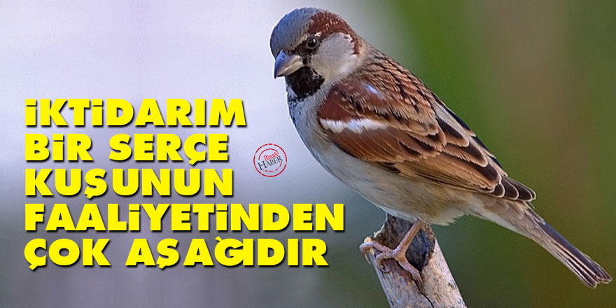 Bediüzzaman: İktidarım, bir serçe kuşunun faaliyetinden çok aşağıdır