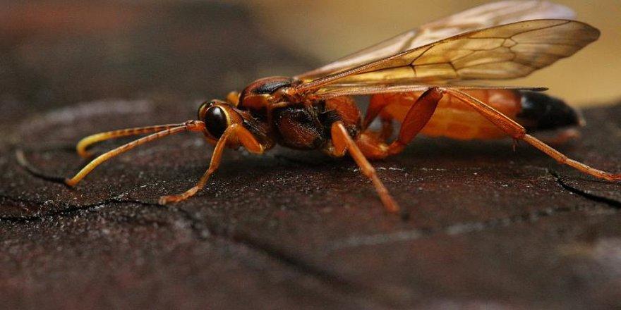 Almanya böcekleri korumak için sokak ışıklarını kapatacak