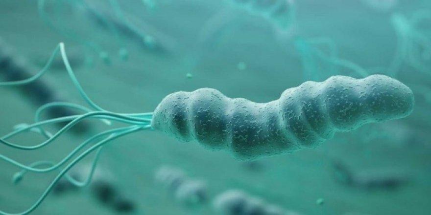 Helikobakter pilori bakterisine dikkat