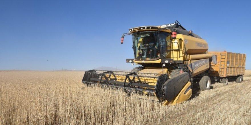 Ahlat'ta buğday hasadı başladı