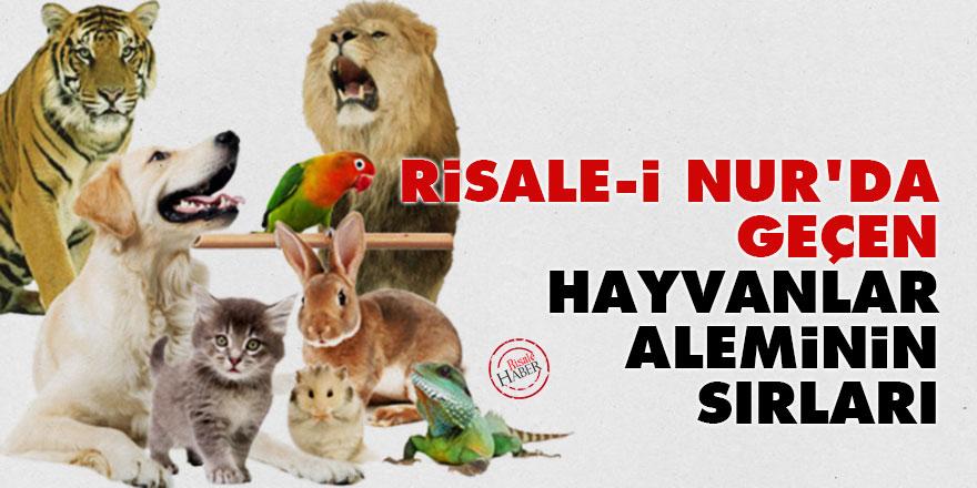 Risale-i Nur'da geçen hayvanlar aleminin sırları