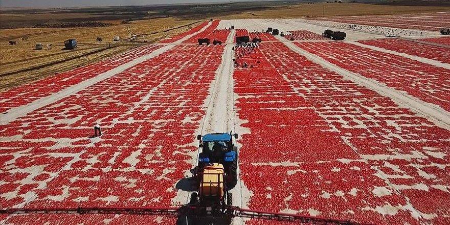 Niğde'den 6 ülkeye kuru domates ihracatı