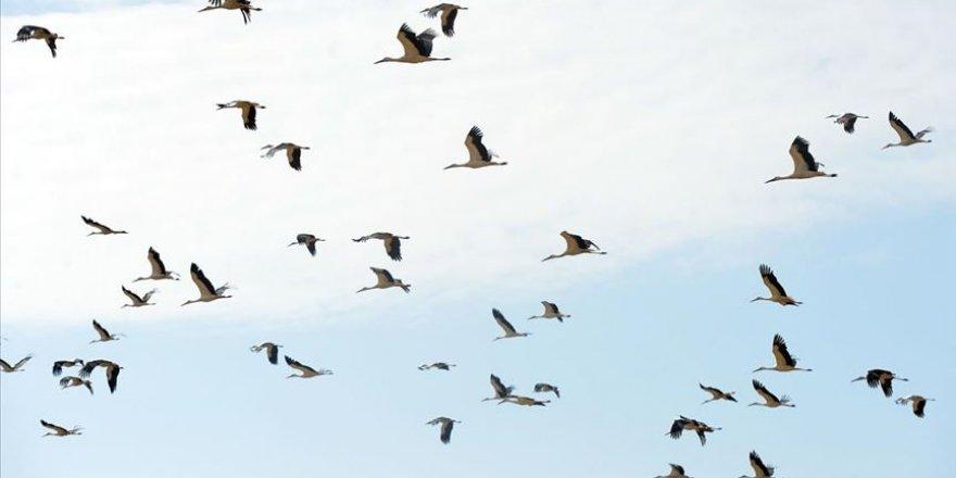 Uşak'ta erken göçe başlayan binlerce leyleğin mola verdiği görüntülendi