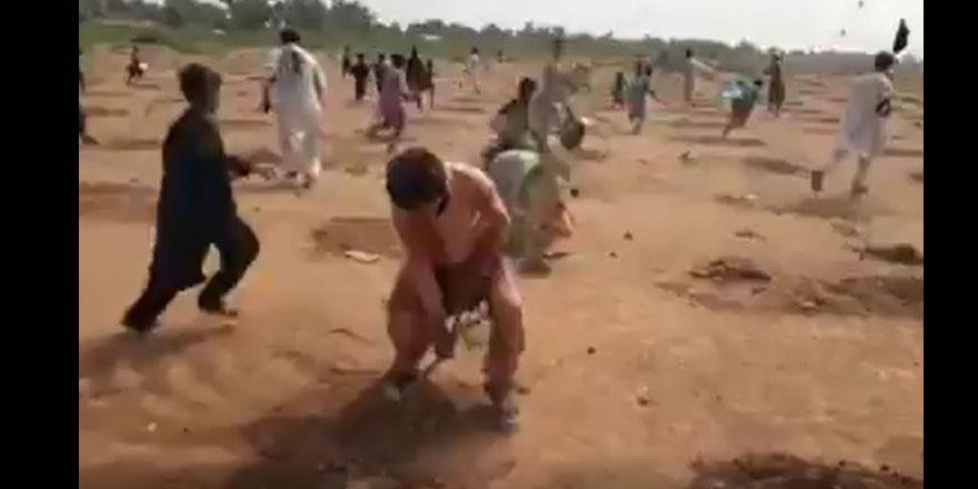 Pakistan'da 6 bin ağaç İslam'a aykırılık nedeniyle sökülmedi