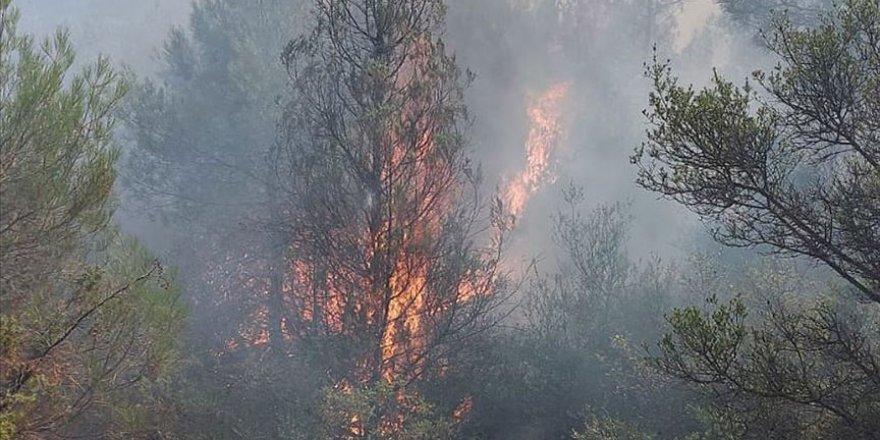 Sakarya'da ormanlık alanda yangın çıktı