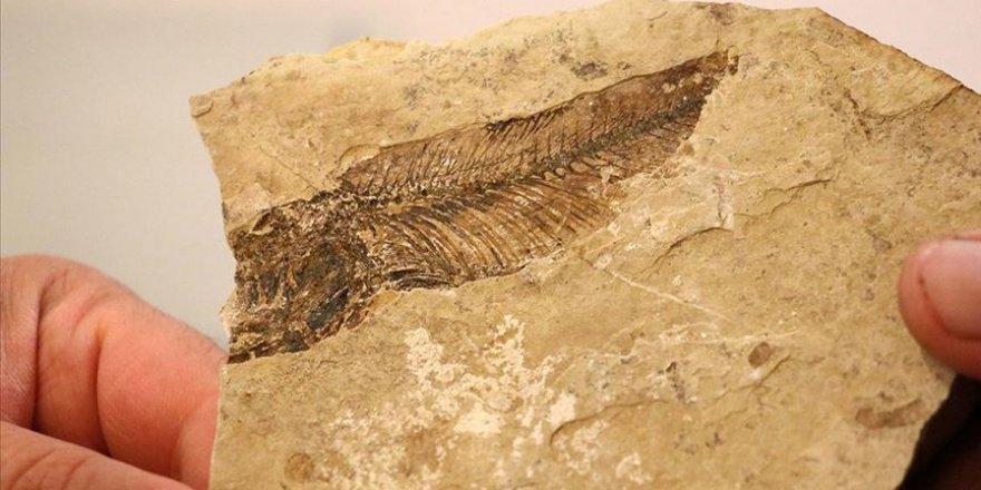 Bolu'da 19 milyon yıl öncesine götüren fosil ormanı