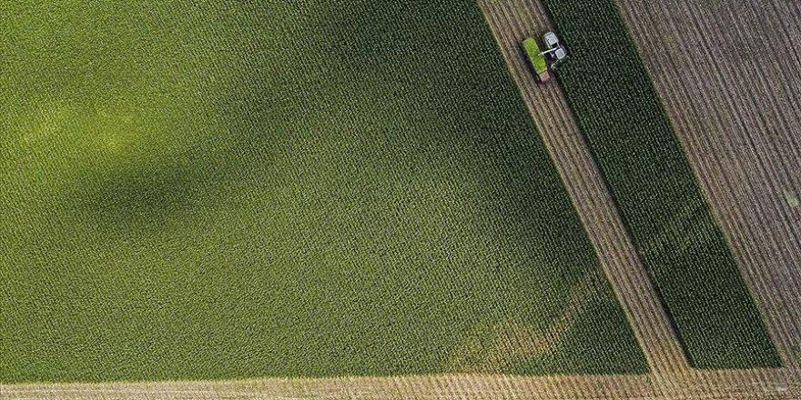 Tarımsal hasıla çiftçiye verilen desteklerle zirve yaptı