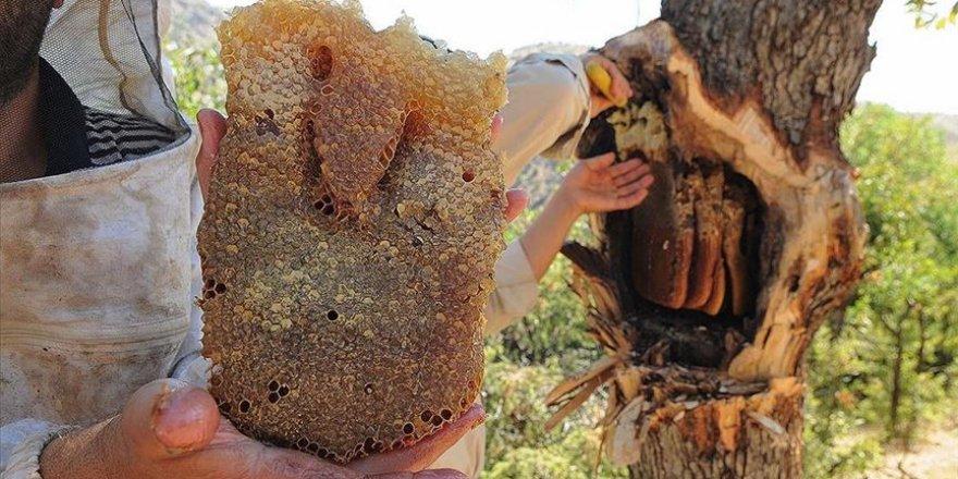 'Bal avcıları' su kenarında arıları takip ederek doğal bala ulaşıyor