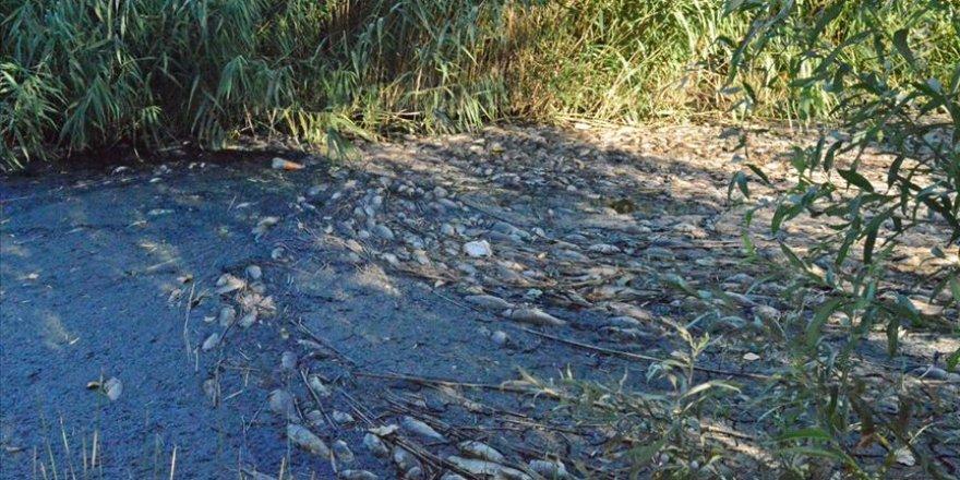 Adıyaman'da sulama kanalında meydana gelen toplu balık ölümlerine incelenecek
