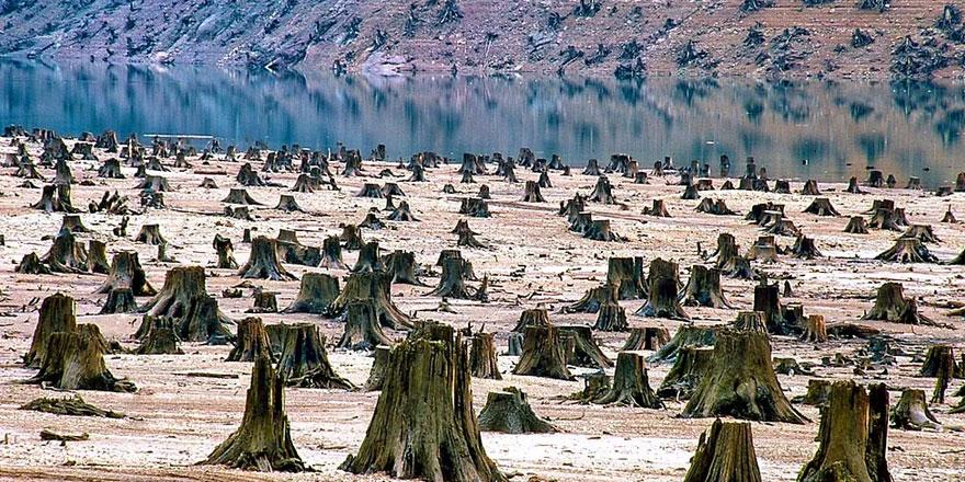 Amazon ormanlarını yok ediyorlar sonra da 'niye musibet bitmiyor' diyorlar