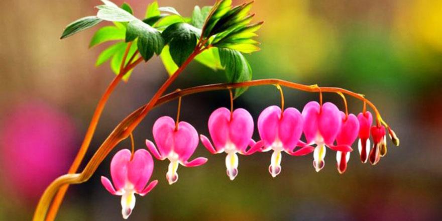 Çiçeklerin küresel ısınma nedeniyle renk değiştirdiği ortaya çıktı