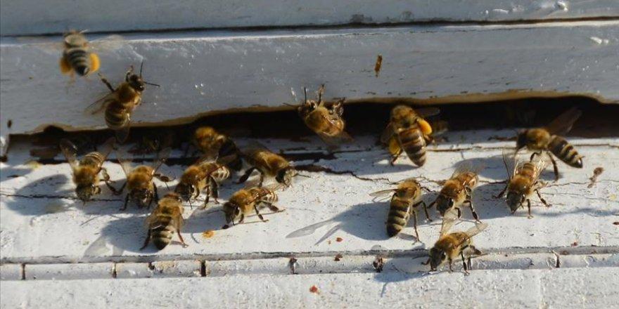 Bazı kanatlı hayvan, koyun ve arı türleri tescillendi