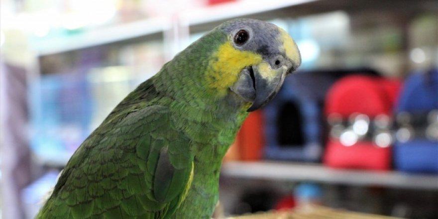 Elazığ'da La ilahe illallah diyen papağan ilgi görüyor