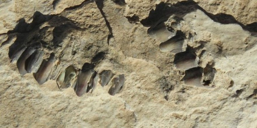 Arap Yarımadası'nda 120 bin yıllık insan ayak izleri keşfedildi