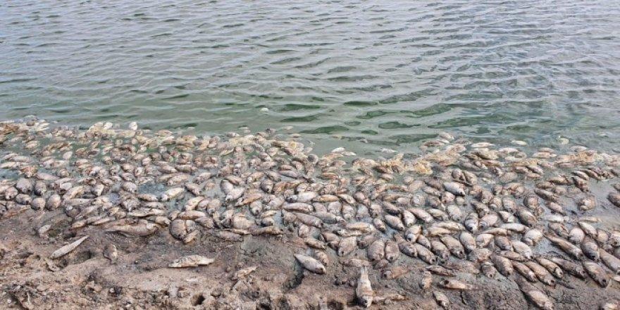 Baraj kurudu, balıklar kıyıya vurdu
