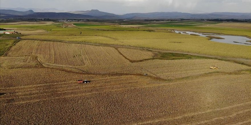 Ağrı'da üretimi yaygınlaşan ayçiçeği bölge ekonomisine katkı sunuyor