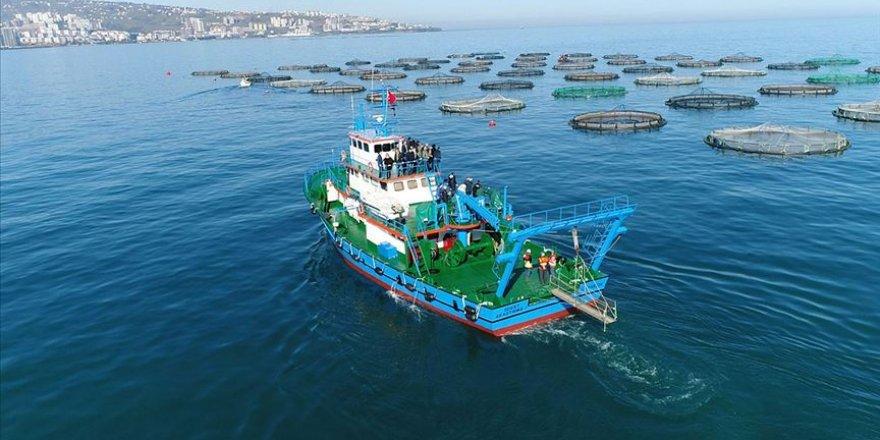 Karadeniz somonuna en çok Rusya rağbet gösterdi
